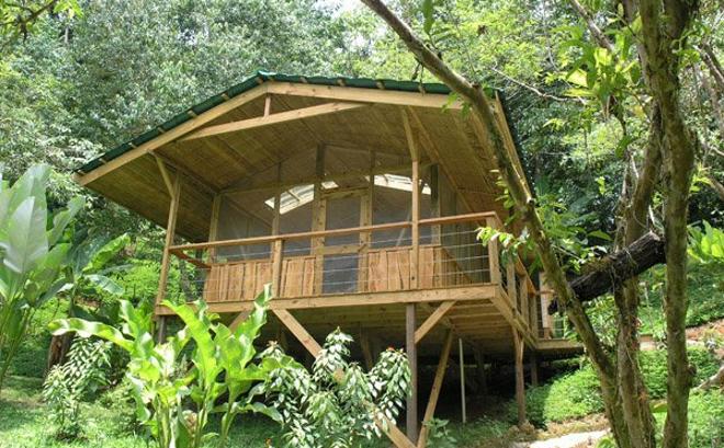 Vivir en una casa rbol - Casas de madera en arboles ...