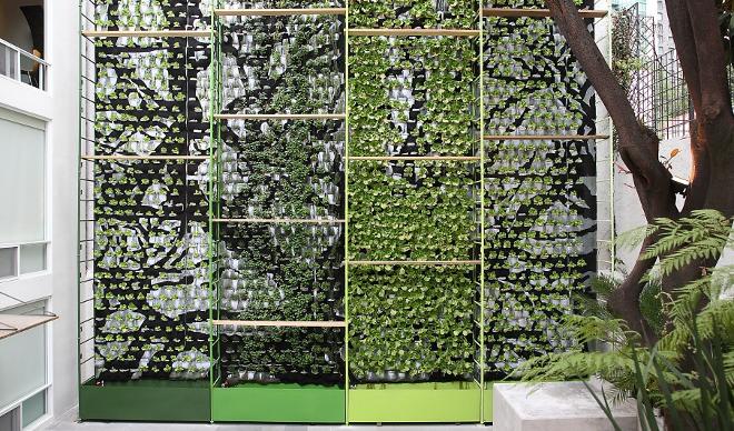 Cultivar lechugas en edificios for Edificios con jardines verticales