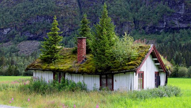 Jardines en tejados for Brulots de jardin