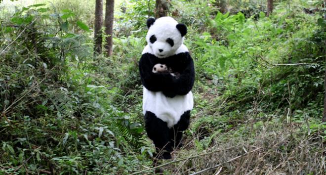 Imagenes De Oso Panda