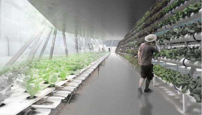 Una torre agricola podria satisfacer el 20 de los alimentos para Londres 2 Una torre agrícola podría satisfacer el 20% de los alimentos para Londres