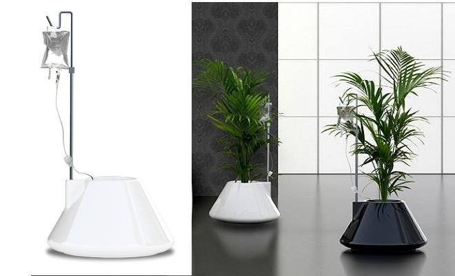 Cultivar plantas en casa para los m s despistados - Plantas aromaticas en casa ...