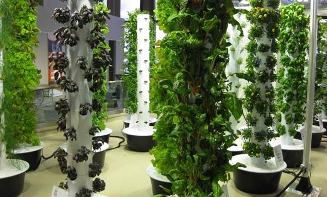 Jard n vertical con verduras ecol gicas en el aeropuerto for Casas de pvc para jardin