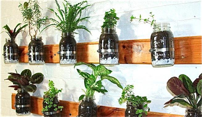 Mini jard n interior de hierbas arom ticas para cocinar for Plantas aromaticas para cocinar