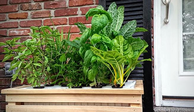Peque o huerto hidrop nico para el hogar for Plantas decorativas para el hogar
