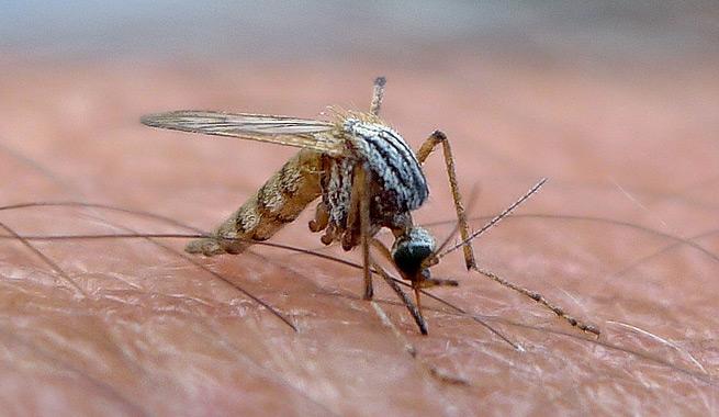 El ventilador un remedio infalible para ahuyentar moscas - Remedio contra las moscas ...