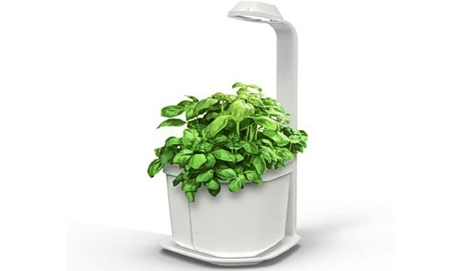 Maceta que hace crecer las plantas tres veces más rápido