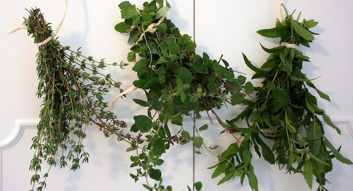 C mo conservar las hierbas arom ticas for Asociacion de plantas aromaticas