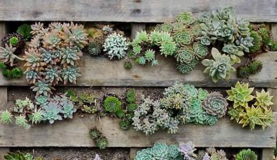 una buena idea es colocar plantas suculentas ya que crecen formando tapices bonitos no requieren grandes cuidados y el riego tambin es mnimo
