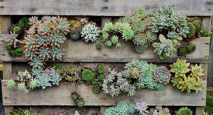 Jardines verticales reciclando palets for Como hacer un jardin vertical con palets