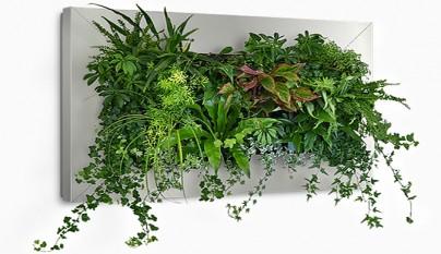 Ideas para hacer jardines verticales con plantas de interior for Jardin vertical interior casa