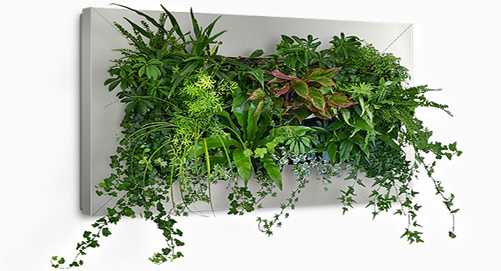 Ideas para hacer jardines verticales con plantas de interior for Plantas usadas para jardines verticales