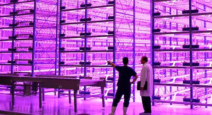 luces led para cultivos de interior