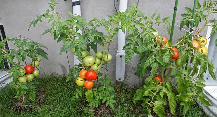 Remedios naturales para cuidar del jard n for Plantas beneficiosas para el huerto