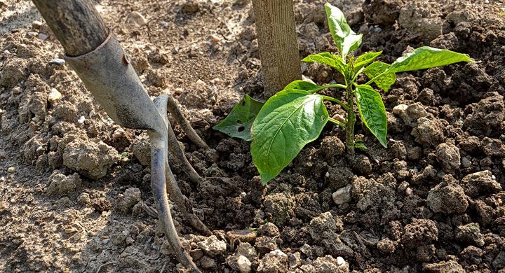 Remedios naturales para cuidar del jard n for Como acabar con las hormigas del jardin
