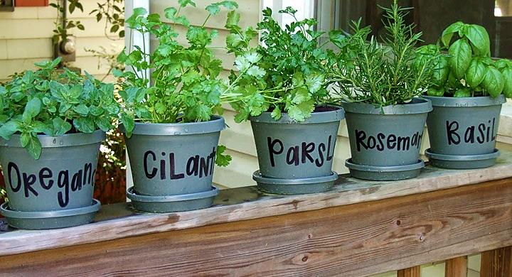 Consejos para tener un mini huerto en casa - Que plantar en el huerto ...