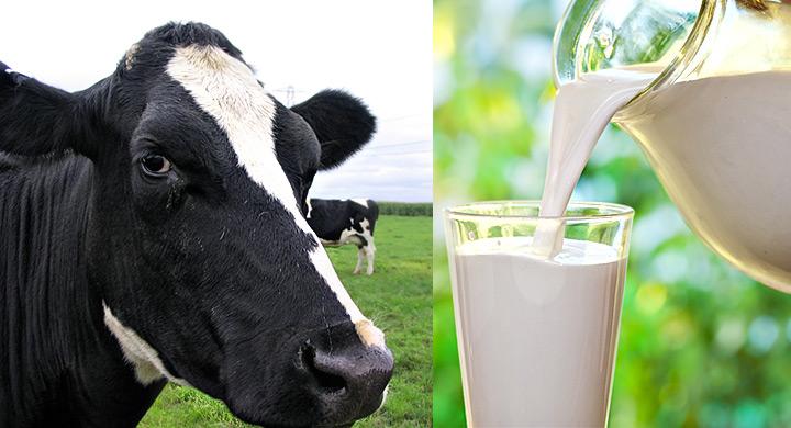 Llena de leche - 2 1