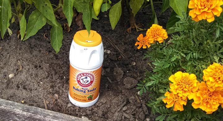 Bicarbonato uso en el jardin