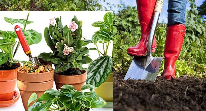 Cinco tipos de abonos org nicos para tu jard n o huerto for Plantas beneficiosas para el huerto