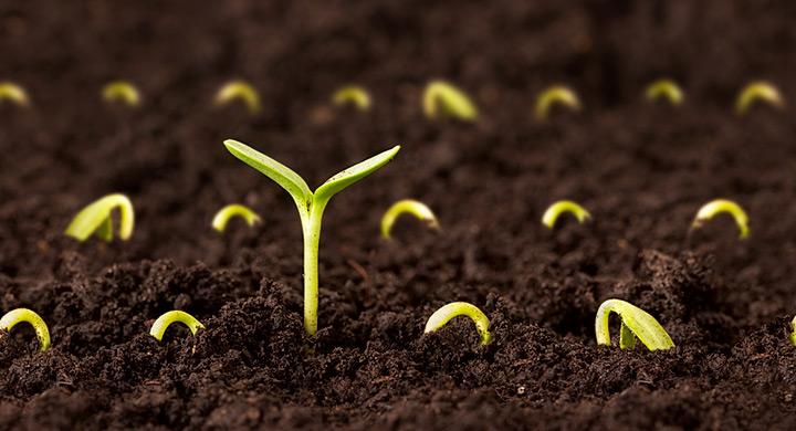 Huerto urbano qu son y para qu sirven los semilleros - Tierra para semilleros ...