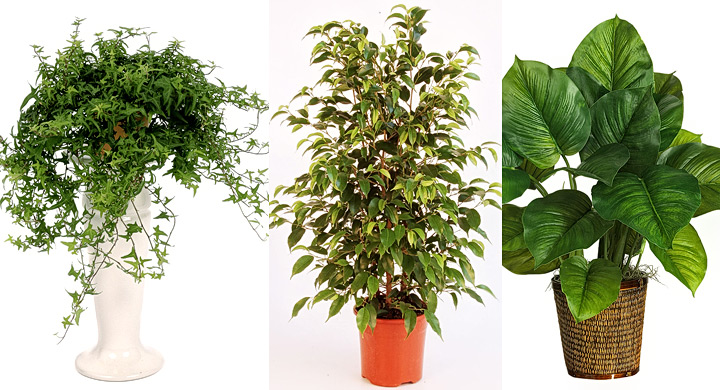 plantas decorativas que purifican el ambiente On cuales son las plantas decorativas