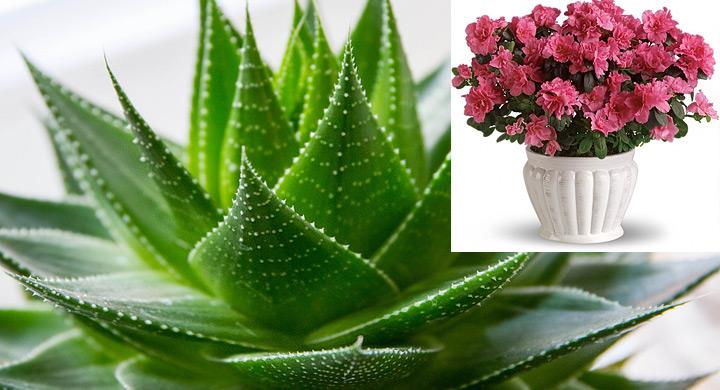 plantas decorativas que purifican el ambiente