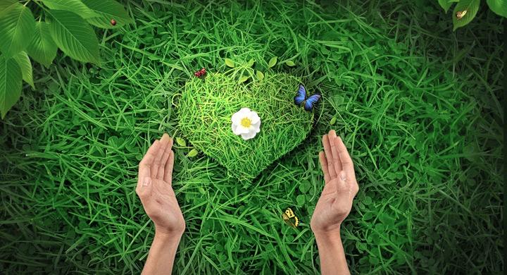 Corazon de hierba