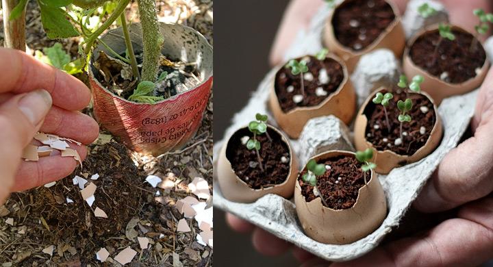 Cinco usos de las c scaras de huevo en el jard n for Abono para las plantas de jardin
