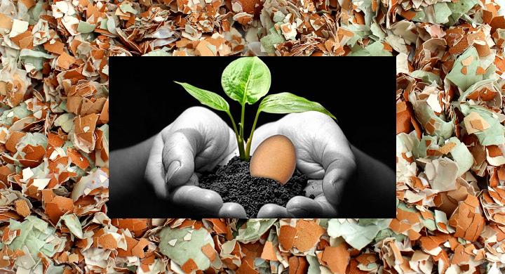 Uso cascaras huevo jardin