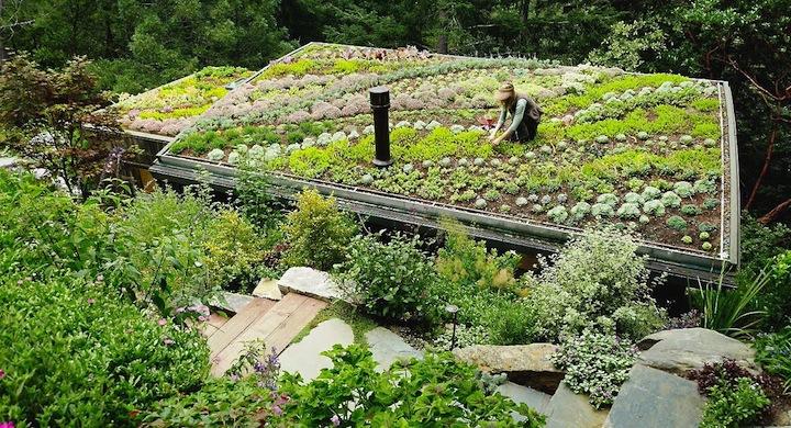 Ideas para un jard n ecol gico de bajo coste - Ideas para jardineria ...