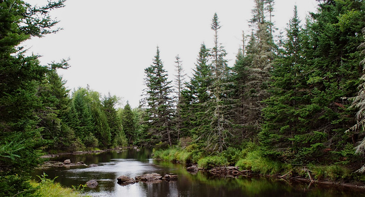 Bosque Maine
