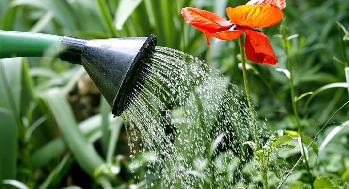 Cinco ideas para ahorrar agua de riego for Ideas para ahorrar agua