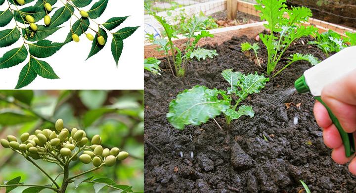 Qué es el aceite de neem y para qué sirve?