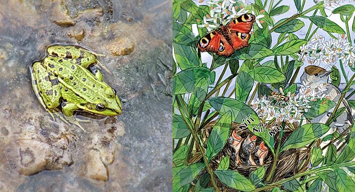 Biodiversidad jardin 2