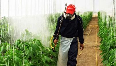 Pesticidas agricultura