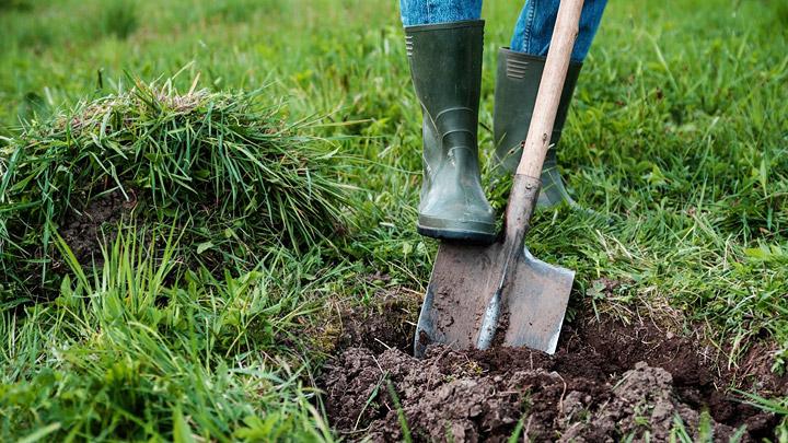 C mo plantar un rbol f cilmente for Tipos de arboles para plantar en casa