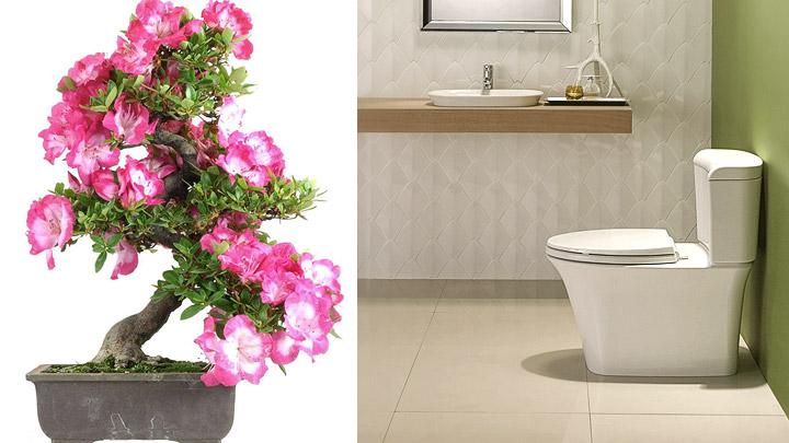 Plantas para descontaminar nuestro hogar