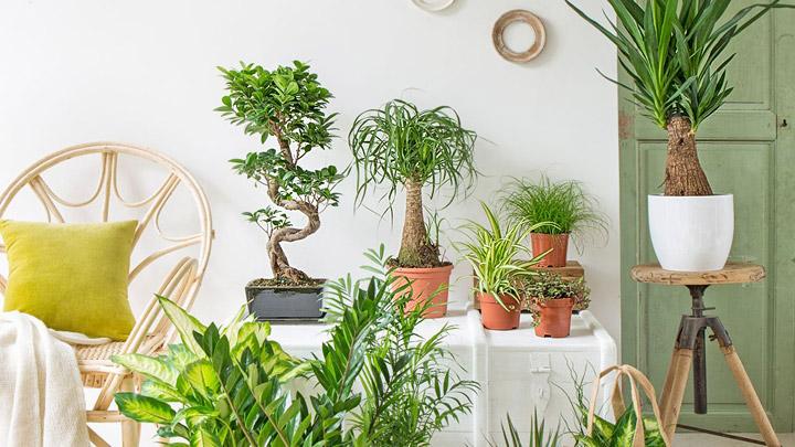 Tres formas sencillas de ahorrar decorar y cuidar el planeta - Plantas del interior ...