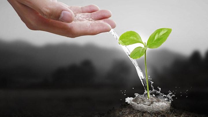 Consejos sostenibles para cuidar las plantas for Como cuidar las plantas ornamentales