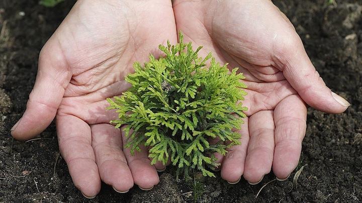 D a de la tierra 2016 tres buenas razones para plantar un for Arboles para plantar en invierno