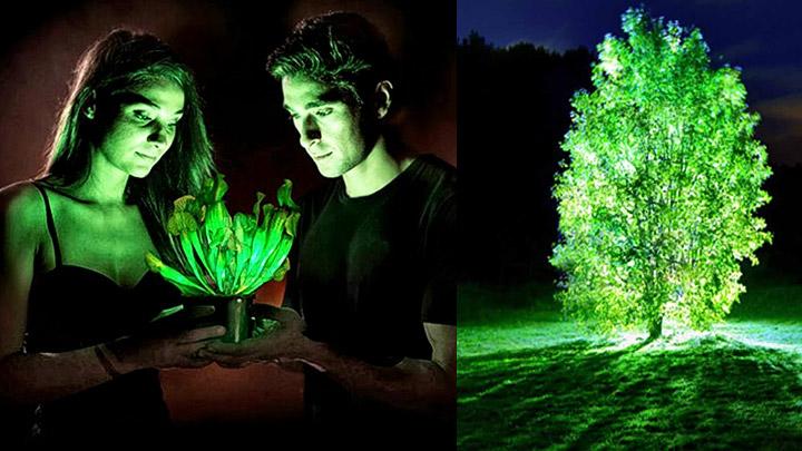 arboles-y-plantas-que-emiten-luz