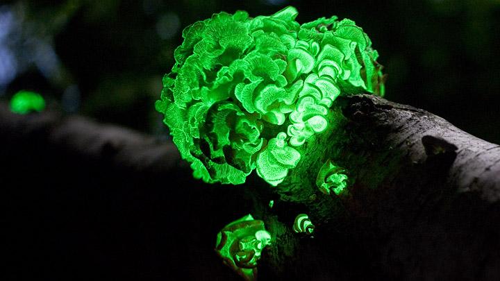 bioluminiscencia-naturaleza