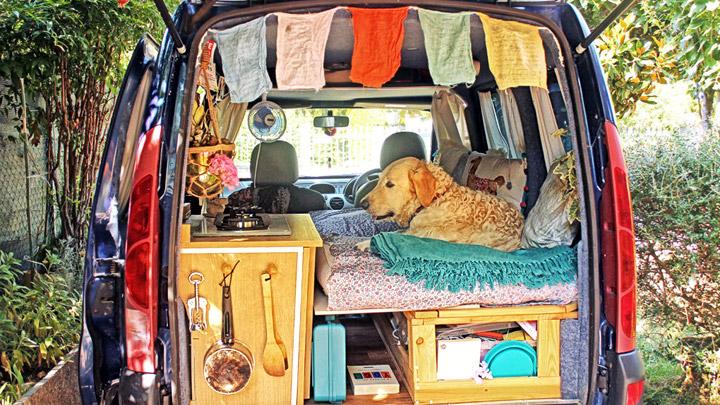 Perro-en-una-furgoneta