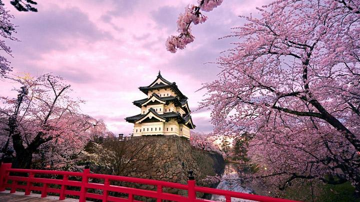 Cerezos-en-flor-Japon