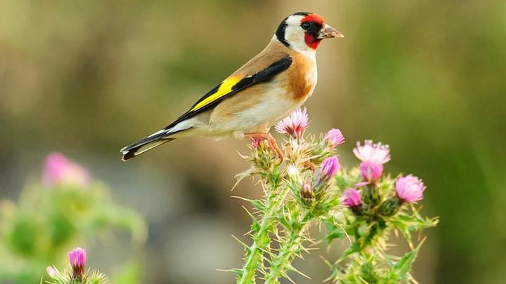 aves-extincion