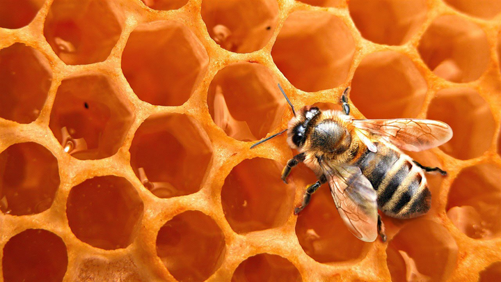 miel-ecologica
