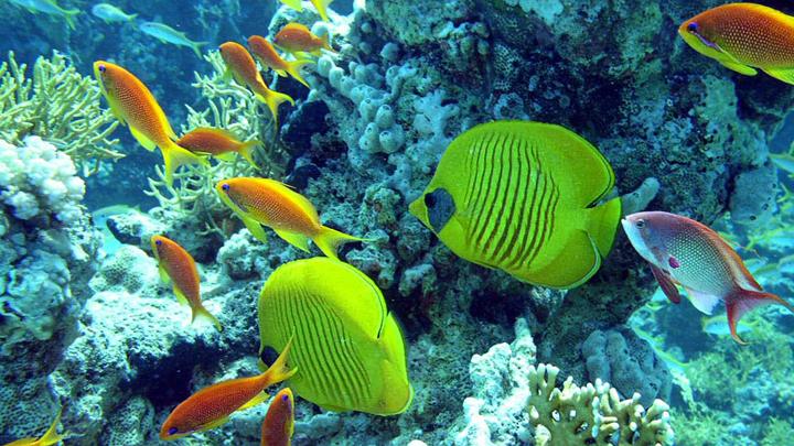 reserva-marina