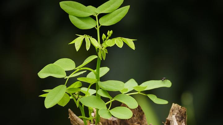 semillas-ecologicas