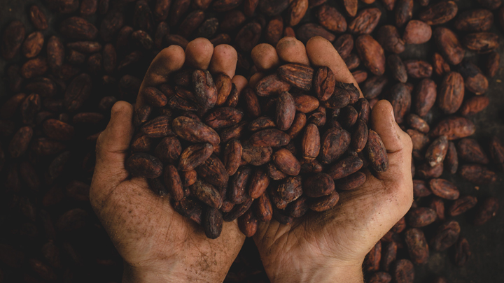 cacao-biomasa