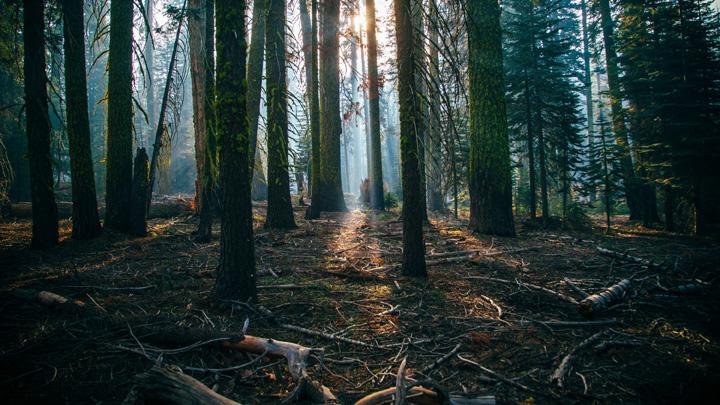 drones-reforestacion